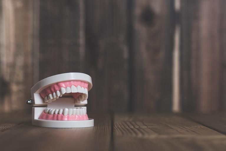入れ歯模型